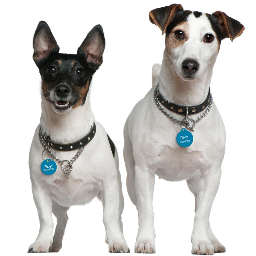 Hondenpenningen